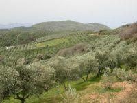 Η ελληνική γεωργία μπροστά στην κρίση: προβλήματα και προοπτικές