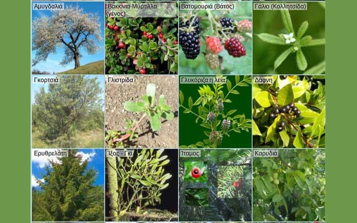 Τι μας προσφέρει η φύση τον μήνα Σεπτέμβριο