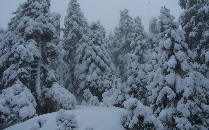 Τι μας προσφέρει η φύση τον μήνα Ιανουάριο