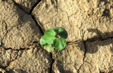 Αγροτική παραγωγή, κρίση και ανασυγκρότηση