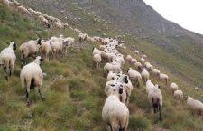 Η εκτατική κτηνοτροφία στην Ελλάδα και οι προοπτικές της