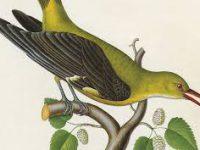 Παρατηρώντας τα πουλιά: Εγκώμιο της ελαφρότητας